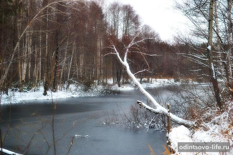 Подмосковный лес зимой