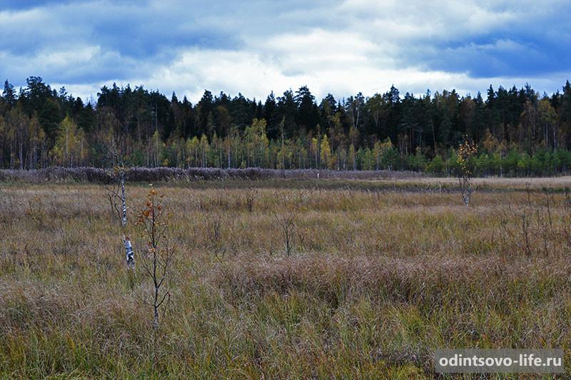 Рыбное озеро Одинцовский район